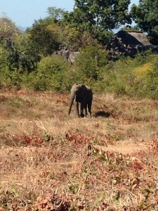 Elephant in our backyard at Kariba