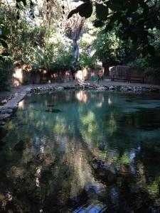 Kapishya Springs