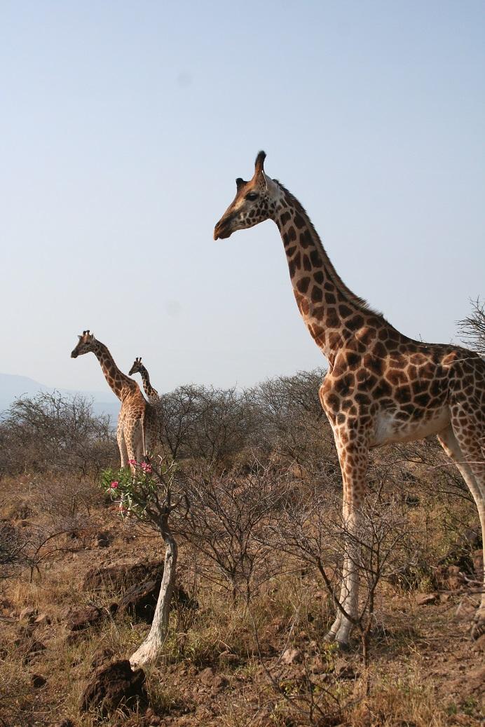 onwards to kenya  u2013 africa through our eyes