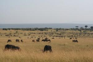 Herds1