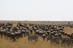 Herds3