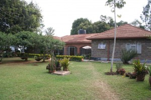 Jungle Junction house