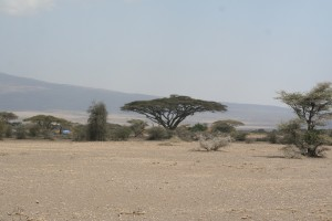 Ngorongoro sights - spot the giraffe